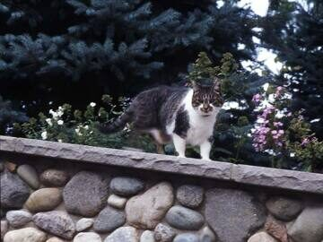 11-cat-on-stone-wall-038